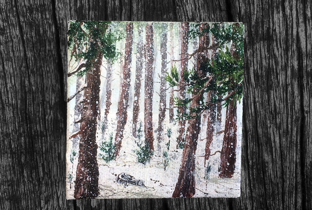 'Hibernate or Evergreen?' – Day 163/365 – R1900