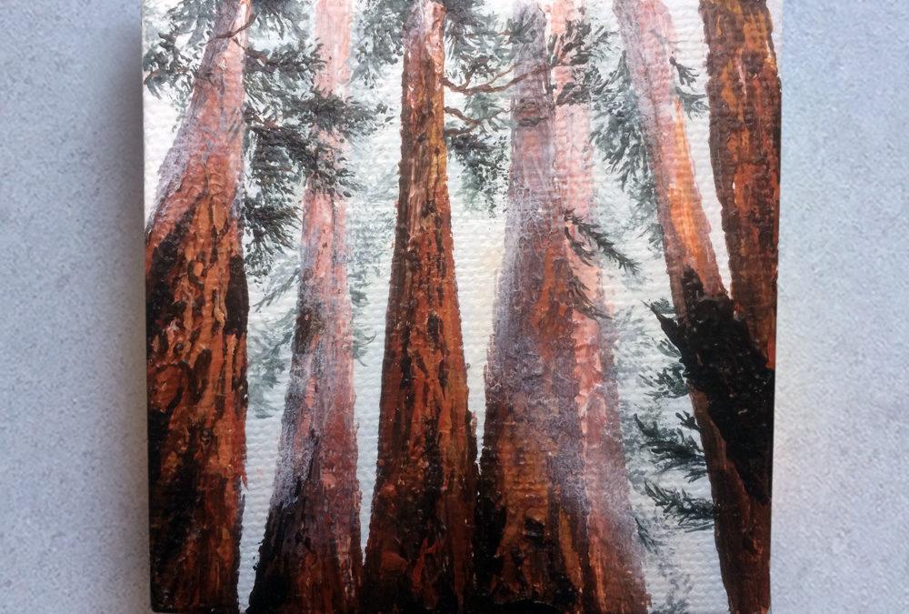 'Reaching Redwoods' – Day 200/365 – R1900