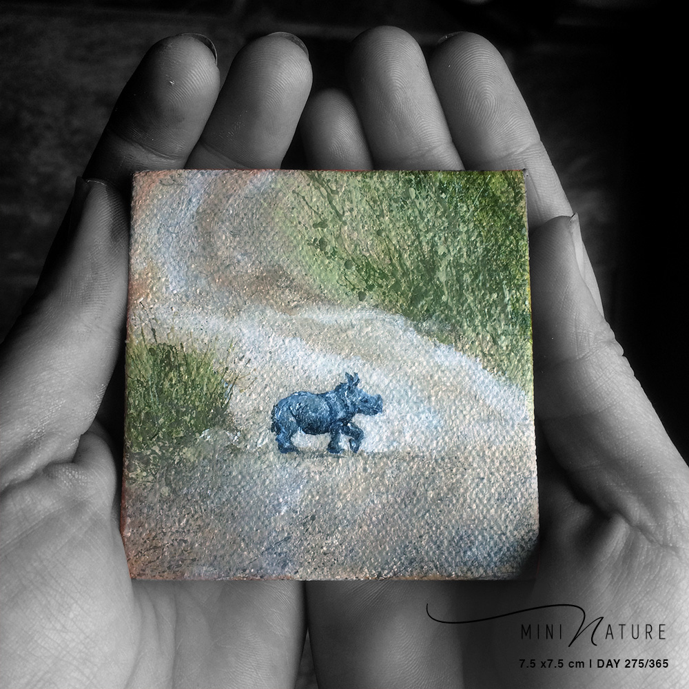 Small Mighty Rhino' – Day 275/365 – R1900
