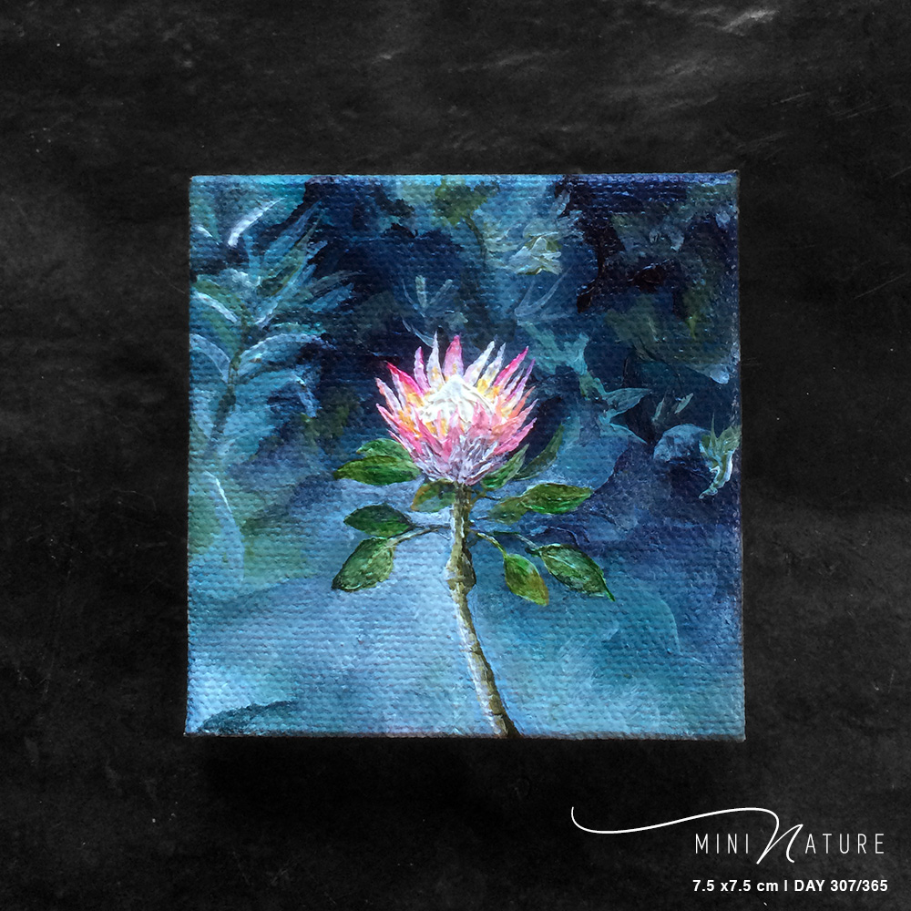 'King Protea' – Day 307/365