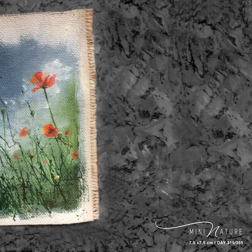 'Wild Poppies' – Day 319/365 – NFS