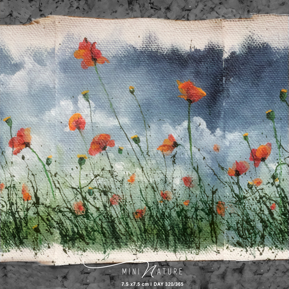 'Wild Poppies 2of 3' – Day 320/365